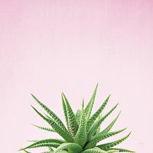 Load image into Gallery viewer, Succulent Simplicity I - FELICITY BRADLEY