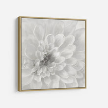 Load image into Gallery viewer, Dahlia - NAN