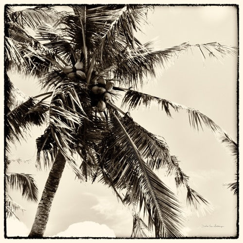 Palm Tree Sepia II - DEBRA VAN SWEARINGEN