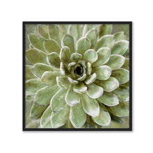 Load image into Gallery viewer, Succulent Verde II - LINDSAY BENSON
