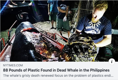 Dead Whale Found With 88 Pounds of Plastic Inside Body in the Philippines