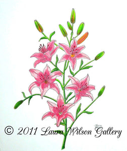 Pink Tiger Lily Original Pencil Drawing - Laura Wilson Gallery