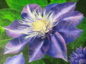Purple Clematis Original Acrylic Painting on Canvas - Laura Wilson Gallery