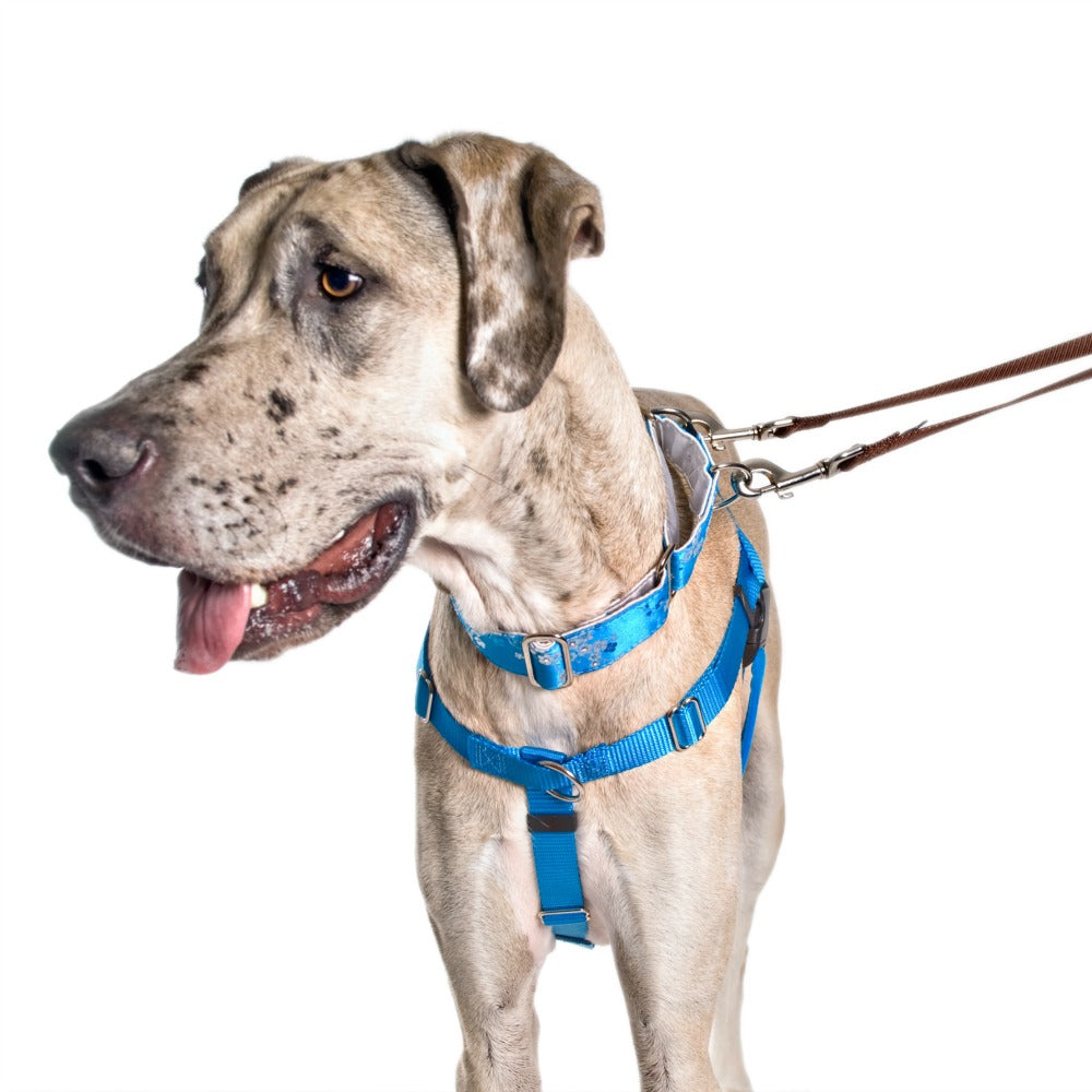 "Freedom No Pull Harness XLarge 1"" - Positive Dog Products"