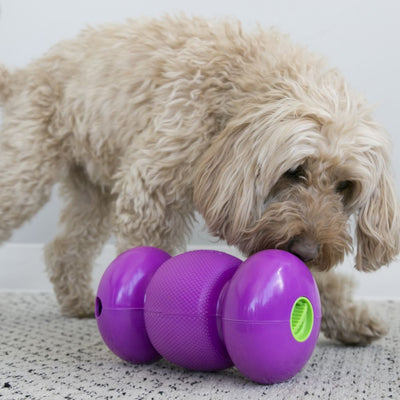 KONG Replay Small | Positive Dog Products | Adelaide