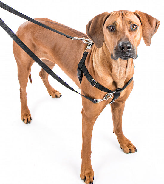 "Freedom No Pull Harness XXLarge 1"" - Positive Dog Products"