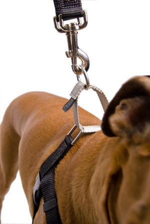 Freedom No Pull Harness Medium 1"
