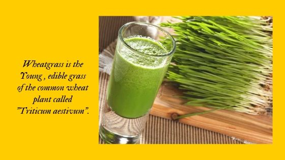 what is wheatgrass