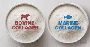 bovine vs fish collagen