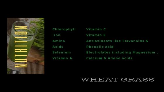 wheatgrass nutrition