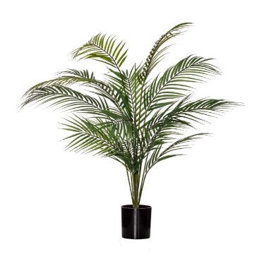 Potted Phoenix Palm 50X50