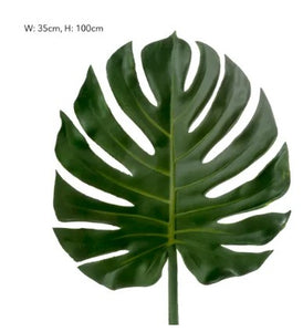 Split leaf Philodendron Stem Green