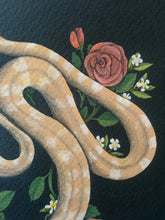 Load image into Gallery viewer, Pet Portrait: Francis the Cornsnake