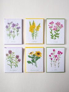 Wildflower Seed Paper Cards