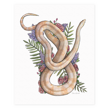 Load image into Gallery viewer, Whisper the Cornsnake