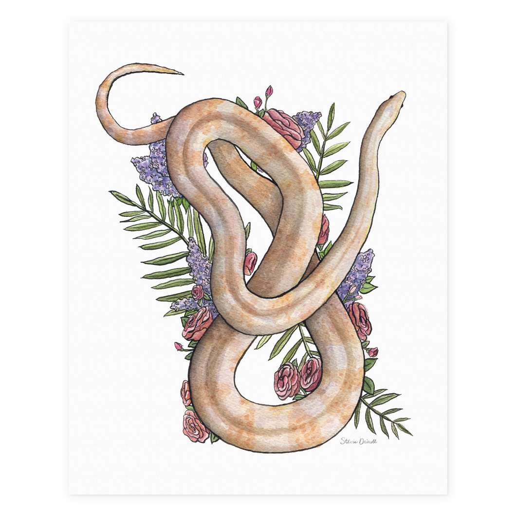 Whisper the Cornsnake