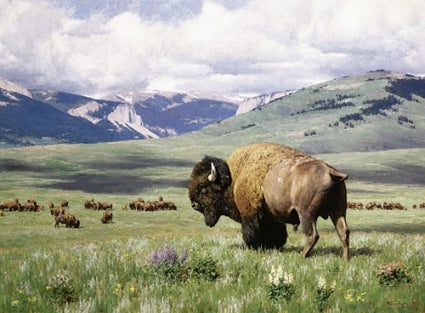 Rocky Mountain Front Tucker Smith artist buffalo prairie clouds mountains