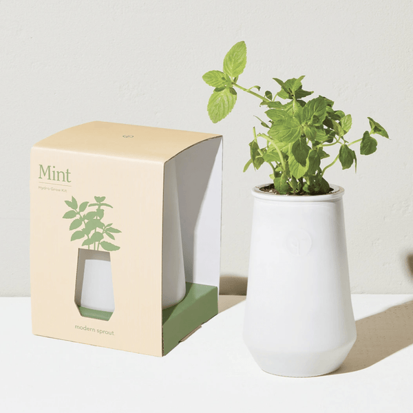 Paris Laundry Home Tapered Tumbler Grow Kit- Mint
