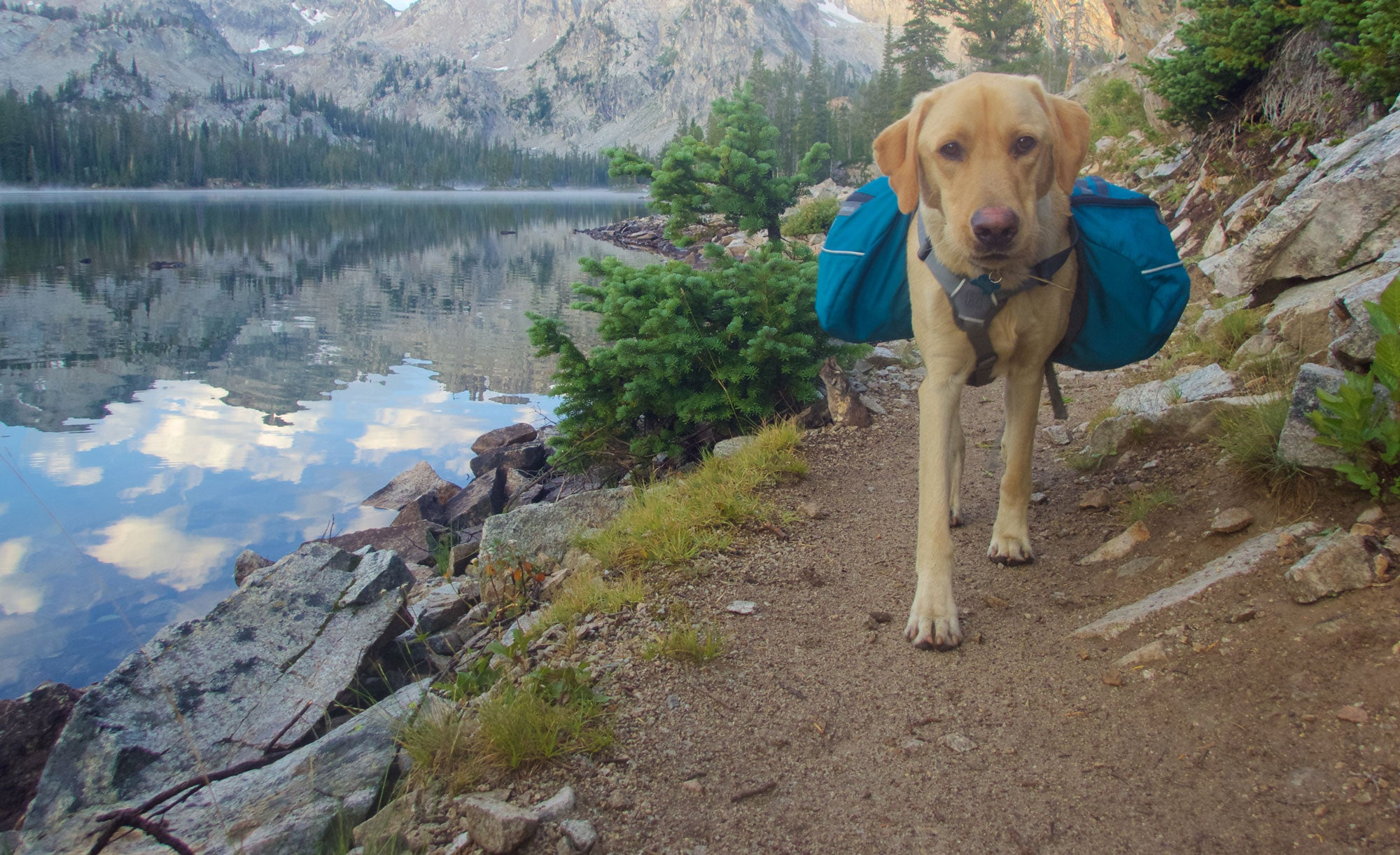 Most & Least Dog-Friendly National Parks