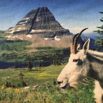 Goat in front of a mountain