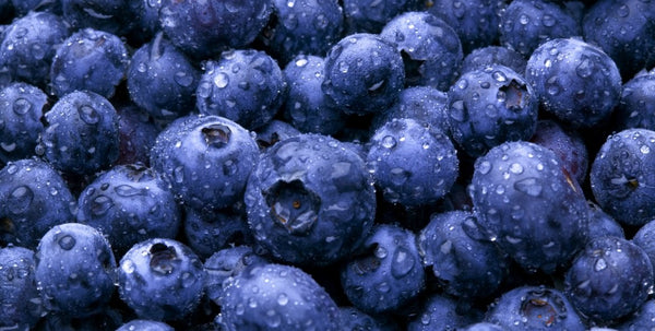 blueberries-health-benefits-for-skin|blueberry-seed-oil-lotions-homemade|Amazing-Benefits-Of-Blueberries-For-Skin|blueberry-holding-skin-benefits-anti-ageing