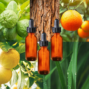 Essential Oil Signature Scent Collection | Citrus (Lemon, Orange, Lemongrass, Bergamot Cedarwood) | The background is made up of images of lemongrass leaves with rain drops on them, cedarwood bark, plus bergamot and orange and lemon fruits on branches with leaves. Three glass amber dropper bottles are in the foreground.
