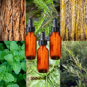 Essential Oil Signature Scent Collection | Refresh (Peppermint, Acadian Forest, Tea Tree) | The background is made up of images of cedarwood, balsam and pine and tea tree needles on twigs, and a birch forest. Three glass amber dropper bottles are in the foreground.