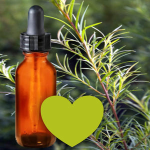 Essential Oil | Tea Tree | The background is made up of tea tree twigs with green needles. A glass amber dropper bottle is in the foreground. An olive green heart at the bottom of the image signifies the signature tea tree scent.