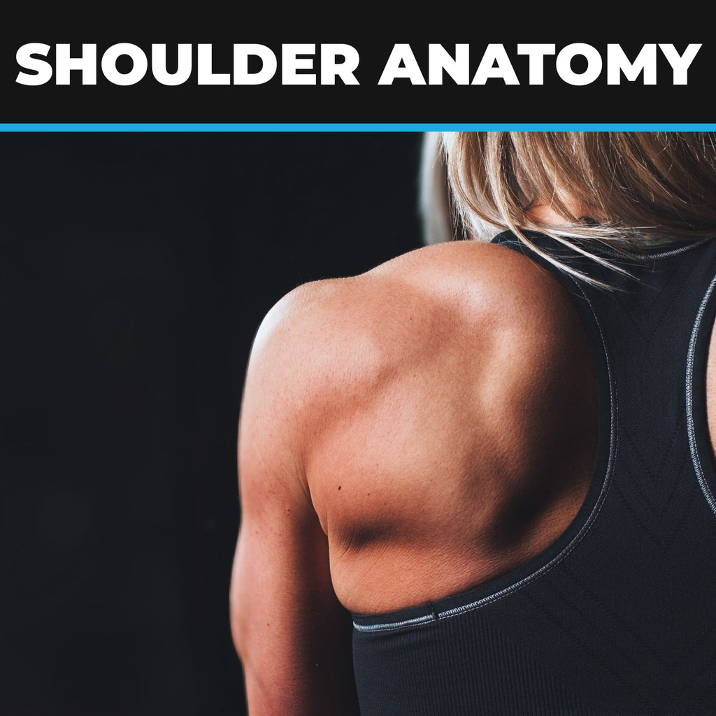 Shoulder Anatomy, Ailments, Injuries & Exercises