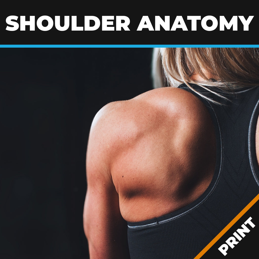 Shoulder Anatomy, Ailments, Injuries & Exercises PRINT
