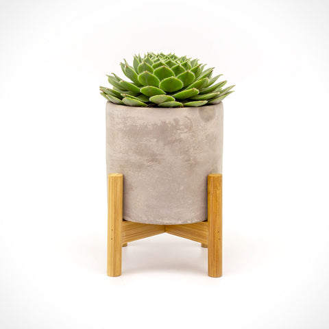 Succulent in Concrete Pot with Bamboo Stand