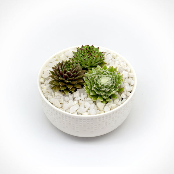 Succulent Bowl with Three Plants