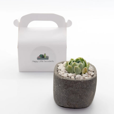 Happy Little Succulents A Stony Delight