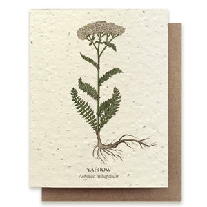 Yarrow Botanical Greeting Cards - Plantable Seed Paper