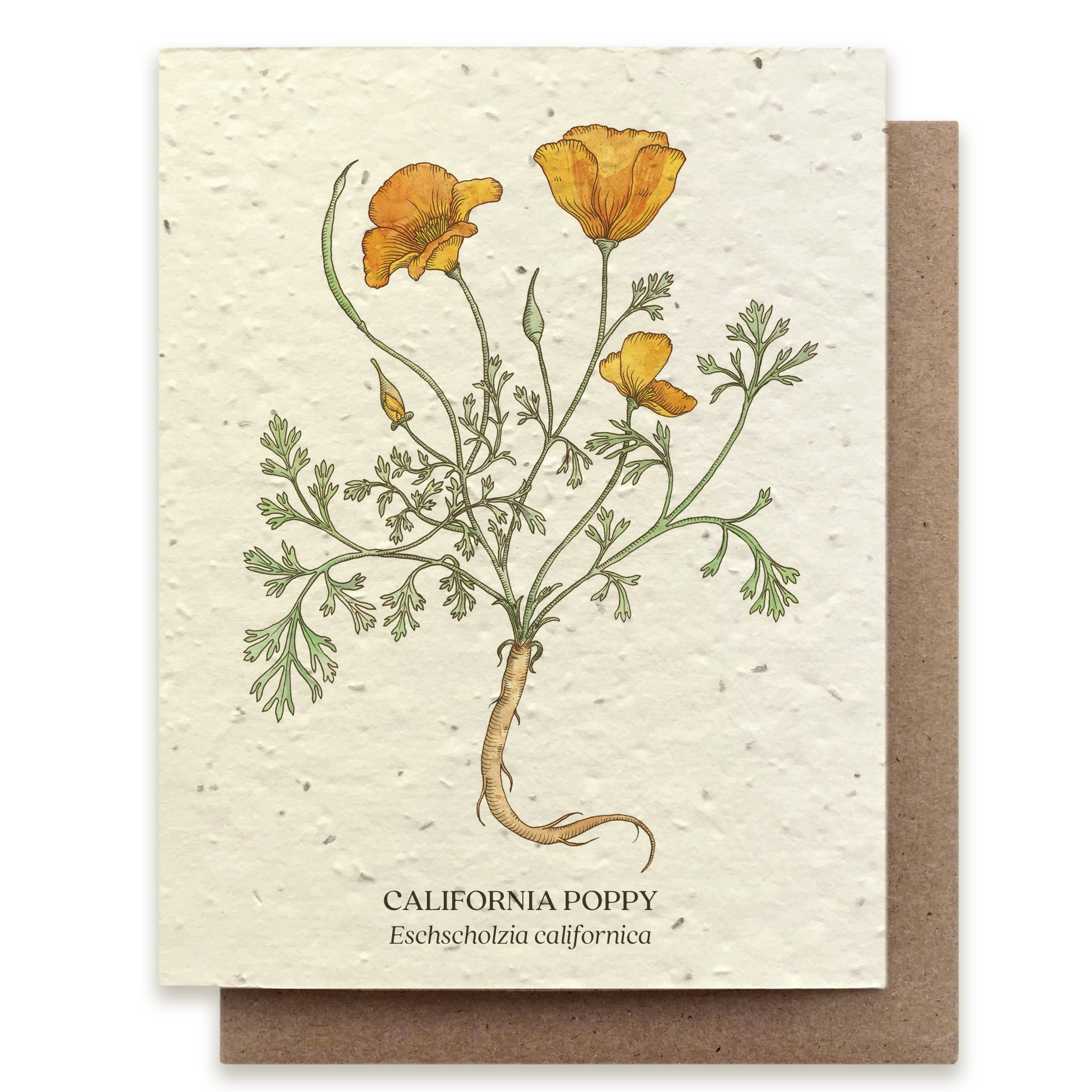 California Poppy Greeting Cards - Plantable Seed Paper
