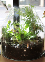 Load image into Gallery viewer, Terrariums