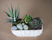 Load image into Gallery viewer, Succulent Potted Garden
