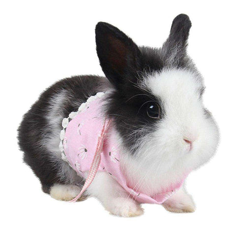 Cute Guinea Pig Rabbit Harness and Leash