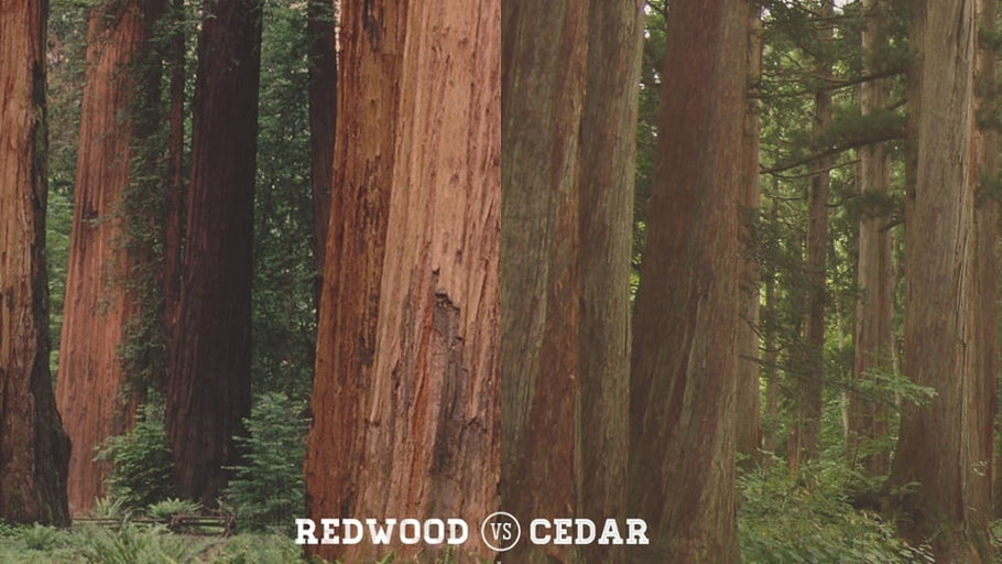 Redwood Vs. Cedar