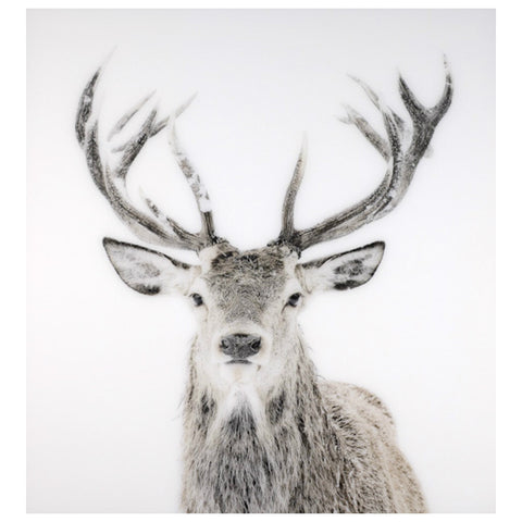 Holiday Decor Must-Haves: 2015 Acrylic Stag Wall Art