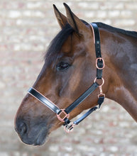 Load image into Gallery viewer, Waldhausen Rose Gold Leather Headcollar