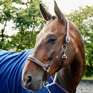 John Whitaker Chicago Perforated Leather Headcollar