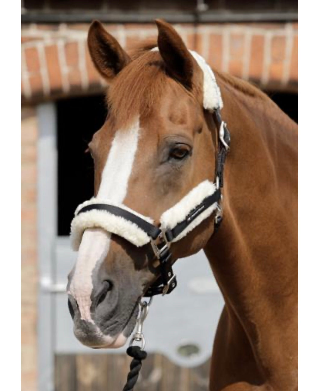 Premier Equine Techno Wool Lined Headcollar