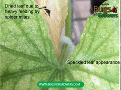 Photo 1. Speckled appearance of a leaf