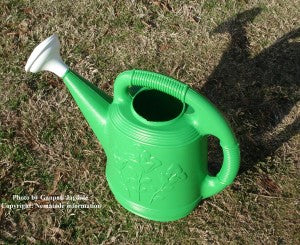 Entomopathogenic nematodes can be applied with a watering can