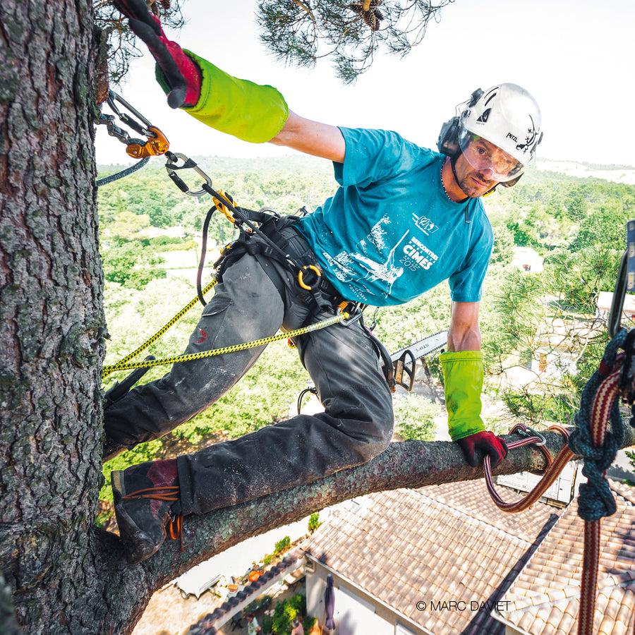 Use Standard Climbing Techniques To Access Trees Refresher