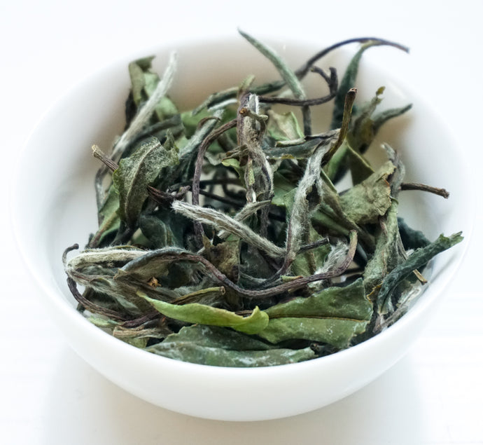 White Peony Tea by Jade Tea