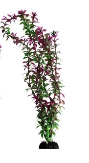 Ecoscape Large Rotala Red