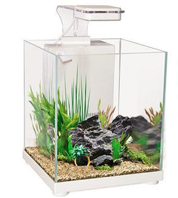 #Betta tank #Siamese Fighter tank
