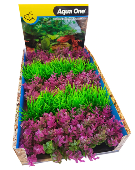 Ecoscape Foreground Catspaw R-lilaeopsis GN Mix Punnet 5pk Dis Box